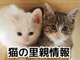 猫里親情報