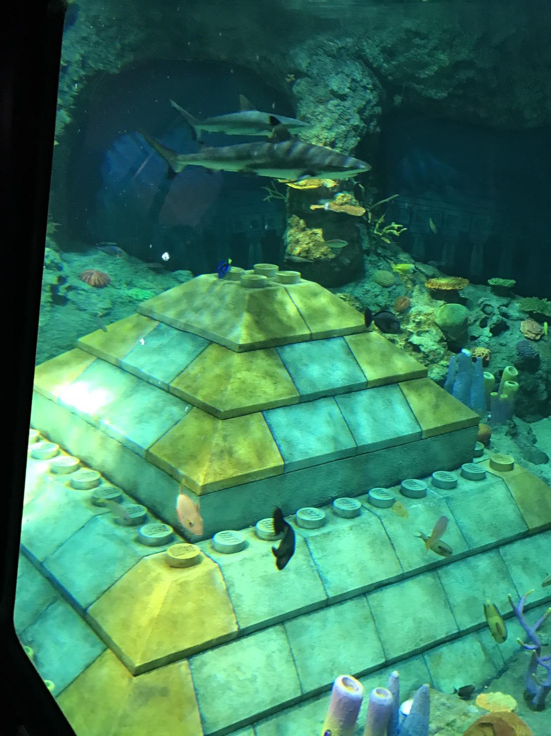 レゴランドサブマリン・アドベンチャー魚